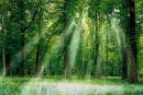 Rừng mang lại nhiều lợi cho con người. Con người phải bảo vệ rừng. Em hãy chứng minh