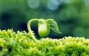 Thiên nhiên là người bạn tốt của con người. Con người cần yêu mến và bảo vệ thiên nhiên. Em hãy chứng minh điều đó.