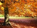 Luyện tập Mùa lá rụng trong vườn trang 88 SGK Ngữ Văn 12