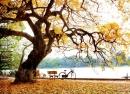 Soạn bài Mùa lá rụng trong vườn trang 82 SGK Ngữ Văn 12