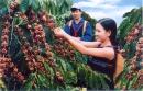 Hình 2 cho biết loại cây trồng nào có ở Buôn Ma Thuột? Tìm vị trí của địa phương này trên bản đồ Địa lí tự nhiên Việt Nam.