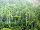 Dựa vào bảng số liệu, hãy nhận xét về diện tích rừng được trồng mới ở Phú Thọ?