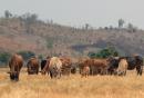 Dựa vào bảng số liệu, em hãy cho biết con vật nào được nuôi nhiều hơn ở Tây Nguyên ?