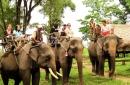 Ở Tây Nguyên, voi được nuôi để làm gì ?