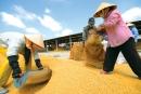 Quan sát các hình dưới đây, kể tên theo thứ tự các công việc trong thu hoạch và chế biến gạo xuất khẩu ở đồng bằng Nam Bộ.