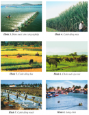 Quan sát các hình sau, em hãy xếp các hình theo nhóm ngành sản xuất cho phù hợp : trồng trọt; chăn nuôi; nuôi trồng, đánh bắt thuỷ sản; các ngành khác.