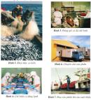 Quan sát các hình trên, nêu thứ tự các công việc từ đánh bắt đến tiêu thụ hải sản.