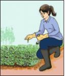 Câu 10 trang 53 SGK Công Nghệ 7