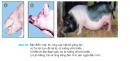 Câu 8 trang 129 SGK Công Nghệ 7