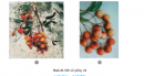 Câu 1 trang 48 SGK Công Nghệ 9 - Trồng cây ăn quả