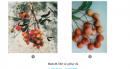Câu 2 trang 48 SGK Công Nghệ 9 - Trồng cây ăn quả