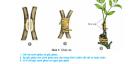 Câu 1 trang 23 SGK Công Nghệ 9 - Trồng cây ăn quả