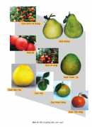 Câu 1 trang 37 SGK Công Nghệ 9 - Trồng cây ăn quả