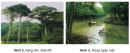 Quan sát tranh ảnh và dựa vào vốn hiểu biết, em hãy so sánh sự khác nhau giữa rừng rậm nhiệt đới với rừng ngập mặn (về môi trường sống và đặc điểm cây trong rừng).