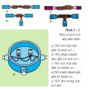 Câu 4 trang 54 SGK Công Nghệ 9 - Lắp đặt mạng điện trong nhà