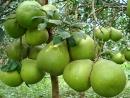 Câu 3 trang 37 SGK Công Nghệ 9 - Trồng cây ăn quả