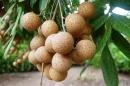 Câu 1 trang 43 SGK Công Nghệ 9 - Trồng cây ăn quả