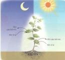 Chỉ vào sơ đồ 2 và nói về sự trao đổi khí của cây xanh trong quá trình hô hấp. Quá trình hô hấp diễn ra khi nào ? Điều gì sẽ xảy ra với cây nếu quá trình hô hấp của cây bị ngừng?