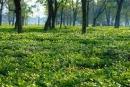 Trong năm cây đậu trên, cây nào sẽ sống và phát triển bình thường ? Tại sao ?