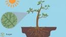 Nêu vai trò của không khí đối với thực vật