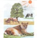 Trong quá trình sống, động vật cần lấy vào cơ thể và thải ra môi trường những gì ?