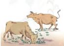 Dựa vào hình 1 để xây dựng sơ đồ (bằng chữ và mũi tên) chỉ ra mối quan hệ qua lại giữa cỏ và bò trong một bãi chăn thả bò