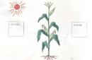 Dựa vào sơ đồ sau, hãy trình bày quá trình trao đổi chất của cây với môi trường
