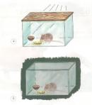 Dự đoán xem con chuột trong hộp nào sẽ chết trước ? Tại sao ? Những con chuột còn lại sẽ như thế nào ?