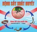 Tác nhân gây ra bệnh sốt xuất huyết là gì ?