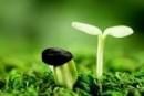 Có rất nhiều cây mọc lên từ hạt, nhưng bạn có biết nhờ đâu mà hạt mọc thành cây không ?