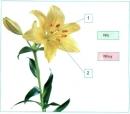 Tìm xem mỗi chú thích phù hợp với số thứ tự nào trong hình
