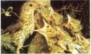 Sưu tầm tranh ảnh về sự nuôi con của chim