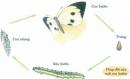 Ở giai đoạn nào trong quá trình phát triển, bướm cải gây thiệt hại nhất ?