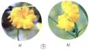 Trong hai hoa mướp dưới đây, hoa nào là hoa đực, hoa nào là hoa cái ?