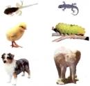Nói tên những con vật có trong hình. Con nào nở ra từ trứng, con nào vừa được đẻ ra đã thành con ?