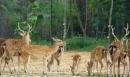 Kể tên một số loài thú thường đẻ mỗi lứa một con, mỗi lứa nhiều con