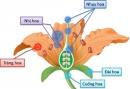 Bầu nhụy phát triển thành gì ?