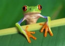 Nếu gia đình bạn sống ở gần hồ, ao, bạn thường nghe thấy tiếng ếch kêu khi nào ?