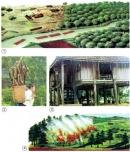 Con người khai thác gỗ và phá rừng để làm gì?