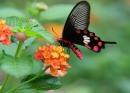 Kể tên một số hoa thụ phấn nhờ côn trùng và một số hoa thụ phấn nhờ gió mà bạn biết