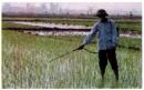 Nêu tác hại của việc sử dụng phân bón hóa học, thuốc trừ sâu,... đối với môi trường đất