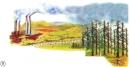 Tại sao một số cây trong hình bị trụi lá ? Nêu mối liên quan giữa ô nhiễm môi trường không khí với ô nhiễm môi trường đất và nước