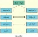 Bài 4 trang 213 SGK Sinh 12