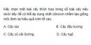 Bài 5 trang 82 SGK Sinh 12
