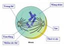 Thu hoạch - Thực hành: Quan sát hình thái nhiễm sắc thể