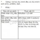 Bài 5 trang 43 SGK Sinh học 11