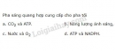 Bài 6 trang 43 SGK Sinh học 11