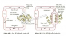 Hãy chỉ ra đường đi của máu (bắt đầu từ tim) trên sơ đồ hệ tuần hoàn hở (hình 18.1) và hệ tuần hoàn kín (hình 18.2). Cho biết những ưu điểm của hệ tuần hoàn kín so với hệ tuần hoàn mở. Cho biết vai trò của tim trong tuần hoàn máu.