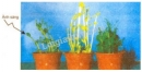 Quan sát hình 23.1 , nêu  nhận xét  về sự sinh trưởng của thân cây non ở các điều kiện chiếu sáng khác nhau.