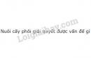 Bài 1 trang 185 SGK Sinh học 11
